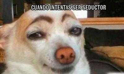 perro seductor