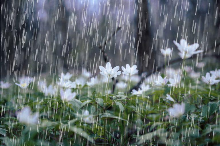 Imágenes de Lluvia: Relajación inmediata