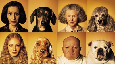 imágenes de perro
