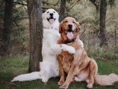 Encantadoras Imágenes de Perros, que Enamoran